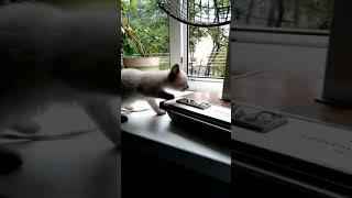 Дневник котёнка по имени симка№2