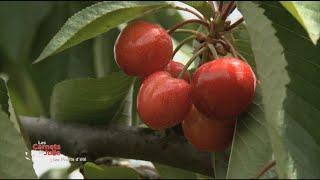 Les saveurs des fruits - Les carnets de Julie