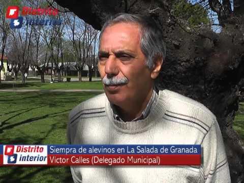 Distrito Interior Televisión Siembra De Alevinos En La Salada