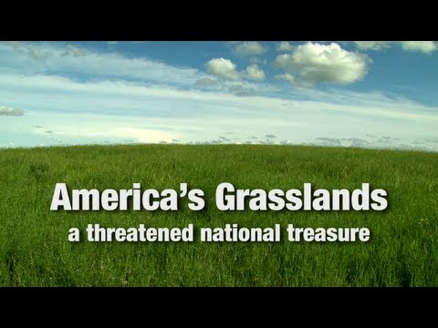 America's Grasslands: A Threatened National Treasure