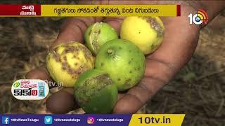 నిమ్మలో సస్యరక్షణ చర్యలు   Prevention Methods Of Citrus Canker In Lemon Crop   Matti Manishi
