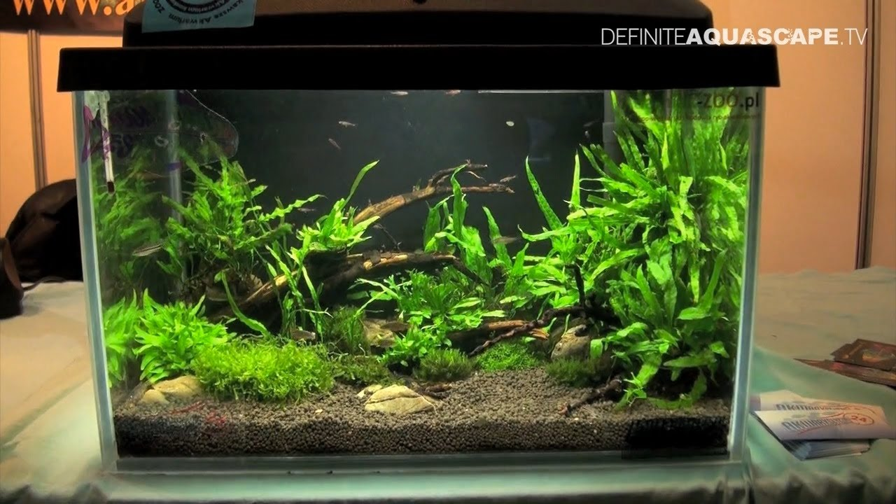 Aquascaping - Aquarium ideas from ZooBotanica 2013, pt.3 ...