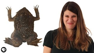 These Baby Toads Burst Out Of Their Mom