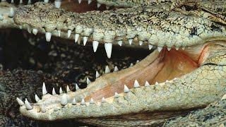 Животные с невероятными #зубами, в существование которых трудно поверить
