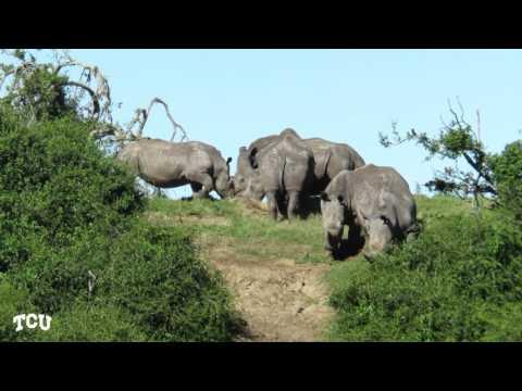TCU Study Abroad South Africa : Biodiversity And Human Development