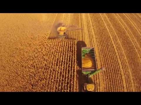 Corn Harvest Claas Lexion 16 Row Head
