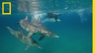 イルカと友達になったイヌ |ナショジオ