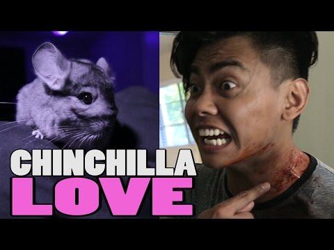 CHINCHILLA LOVE