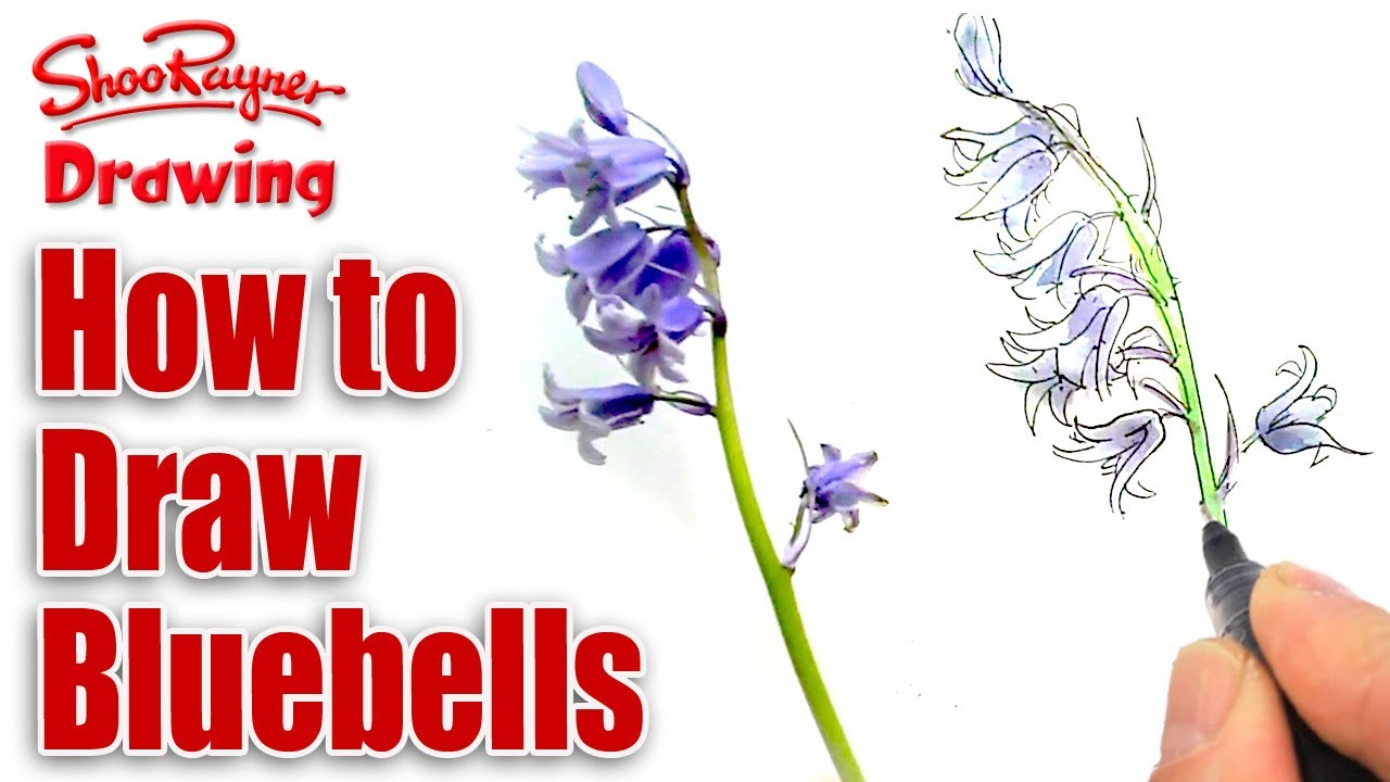 how to draw and paint bluebells youtube