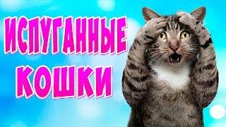 Приколы с котами ТОПовая Подборка - Испуганные кошки