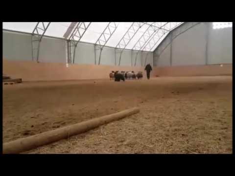 Yasmine herding