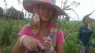 hmong mekas ua teb muag nyob rau eau claire wi 4