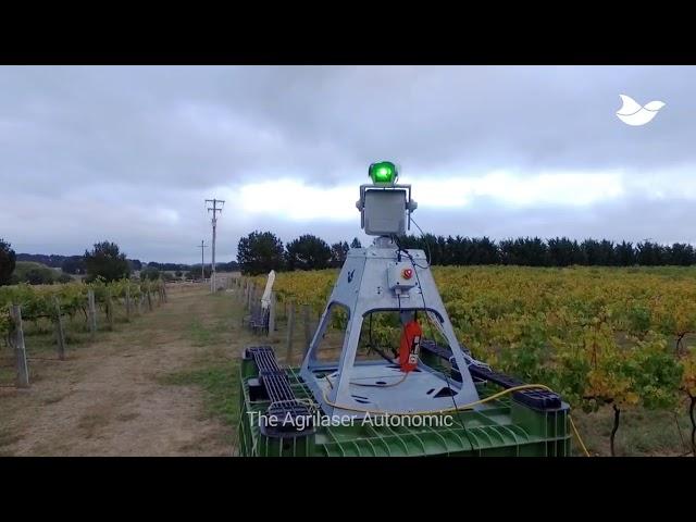Automated laser bird deterrent at Summerhill Road Vineyard, Australia