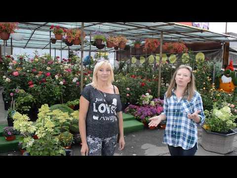 Розы: 92 км МКАД сорта, цены