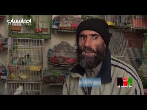 Afg Man Koche Kah Foroshi