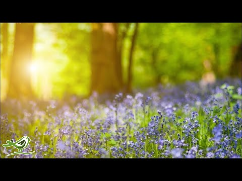 Relaxing Piano Music -  Beautiful Relaxing Music, Sleep Music & Study Music - Ржачные видео приколы