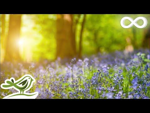 Relaxing Piano Music: Relaxing Music, Sleep Music, Study Music, Beautiful Music ★144 - Простые вкусные домашние видео рецепты блюд
