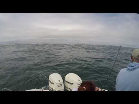 Dominating The 12lb Bluefish In The Monomoy Rips, July 2016