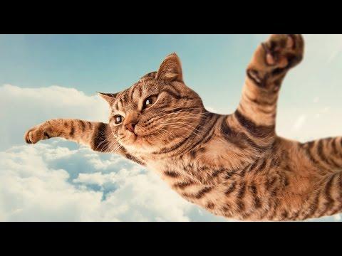 просто фото котята