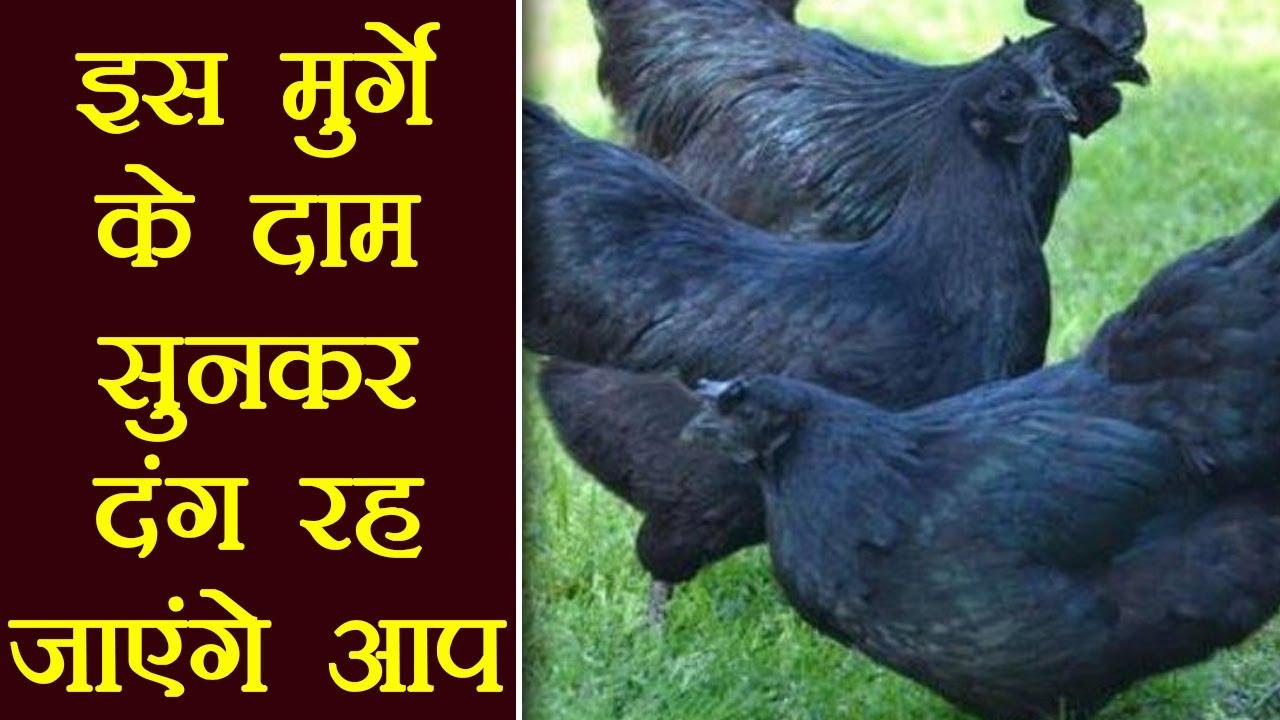 Kadaknath Chicken is in high Demand, here's Why । वनइंडिया हिंदी