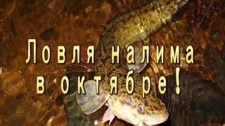 Ловля налима в октябре(Выбрался на рыбалку 30 сентября. Ставил закидушки на налима. Не очень результативная ловля налима в октябре..., 2016-10-03T20:37:32.000Z)