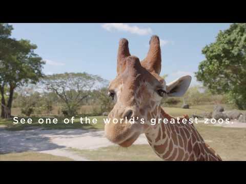 Visit Zoo Miami Today!