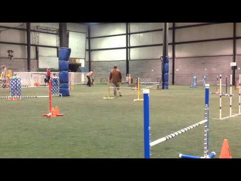 2015 All Breed Agility Day American Boxer Club National Specialty
