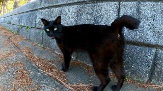 黒猫ちゃんの散歩に付いていってみた