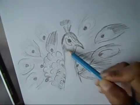 How to draw a peacock with beautiful feathers step by step for kids easy way youtube