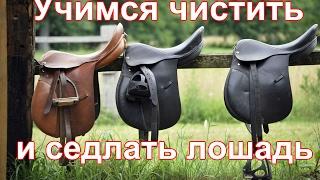 Как чистить и седлать лошадь//Верховая езда с нуля//Содержание лошади.
