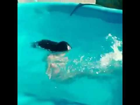 daiana hernandez en tanga en piscina youtube