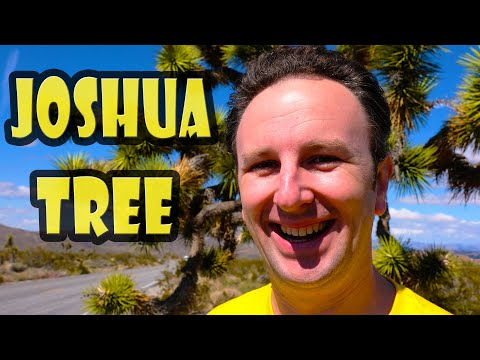 Joshua Tree National Park Tips: 9 Things to Know