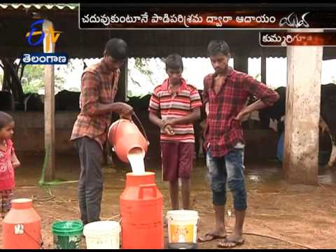 Self Employment | Youth Getting Huge Income | Through Milk Production | Yuva