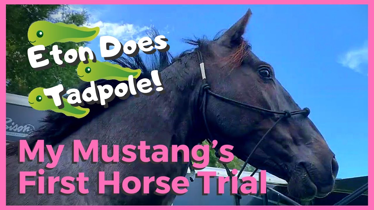 My Mustang's First Horse Trial (aka Eton's First Tadpole)