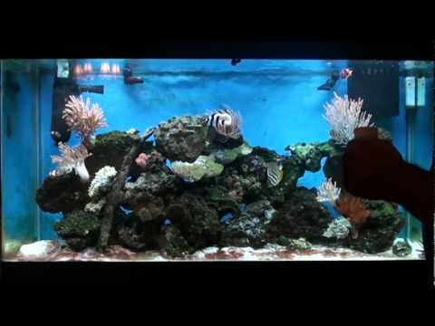 How To Treat Your Aquarium For Cyanobacteria Red Slime