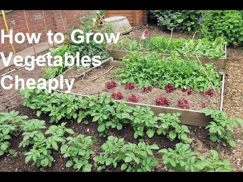 How to Grow Vegetables Cheaply