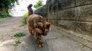 公園で出会ったフワフワ長毛猫がモフられに塀の上に上ってきた