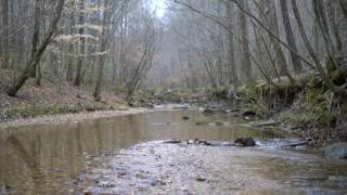 Stream with Nature Sounds in 4K UltraHD