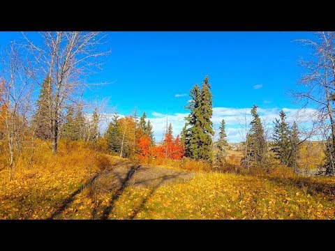 A Beautiful Autumn Day in Calgary with Music in 4K