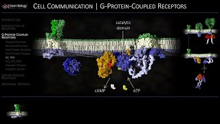 Cell Communication 3 G-Protein-Coupled Receptors