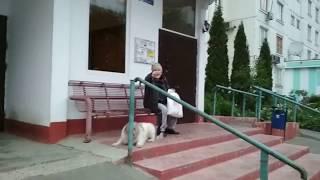 Дворовые Собаки на детской площадке часть 3