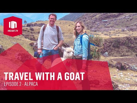 Travel With A Goat | Episode 2 - Alpaca [Full HD] | Insight TV