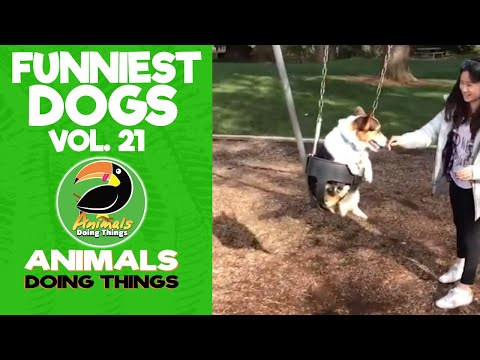 🐶 Try Not To Laugh Funny Dogs Vol. 21 | Animals Doing Things