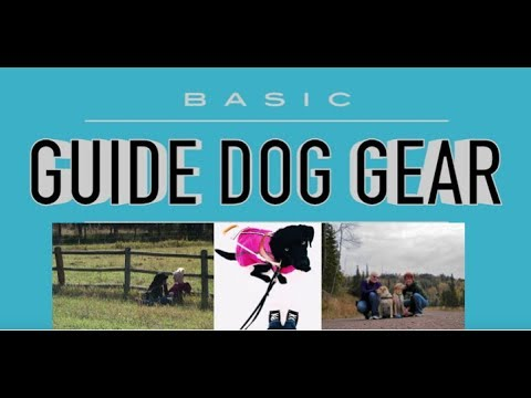 Basic Guide Dog Gear : Daily Tools For A Working Guide Dog