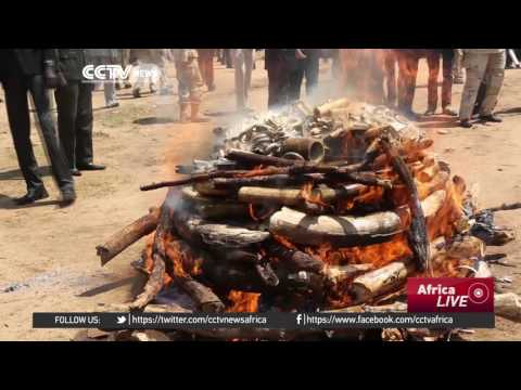 S. Sudan burns more than five tonnes of ivory and rhino horn