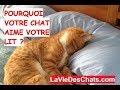 Pourquoi votre chat 🐱 aime votre lit ? Kdo bonus :)