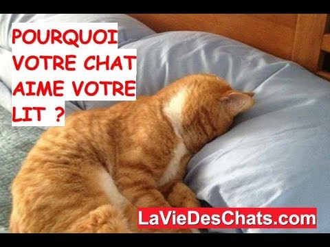 pourquoi votre chat aime votre lit kdo bonus youtube. Black Bedroom Furniture Sets. Home Design Ideas