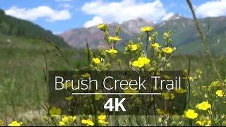 Crested Butte Trails: Brush Creek 4K