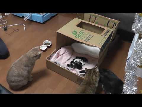 子猫とご対面する秀吉お父さん