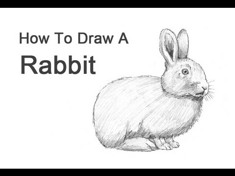 how to draw rabbit fur